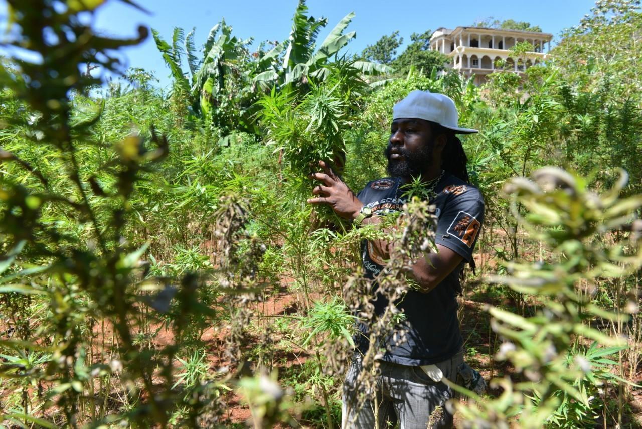 На марихуану ямайке курить ли можно марихуаны москве семена по